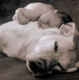 dog nursing baby